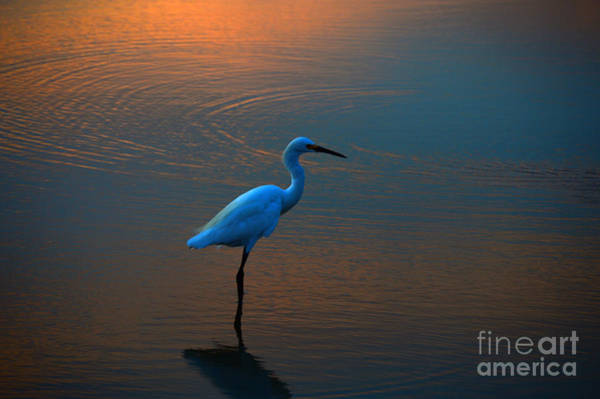 Felton Photograph - Egret Before Dawn by Rob Felton