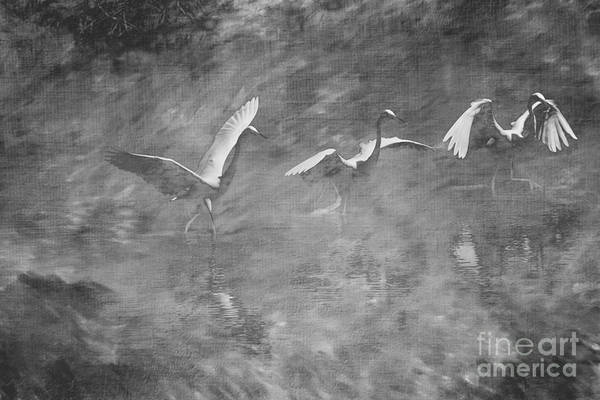 Brinton Photograph - Egret  Bw by Judy Wolinsky