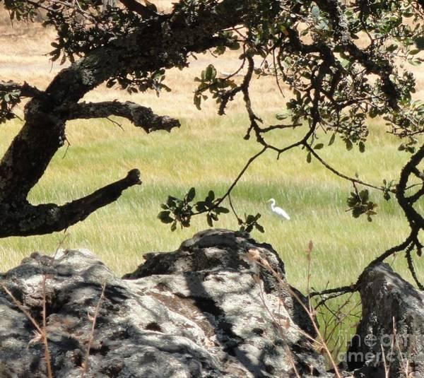 Rockville Photograph - Egret Field by Juan Romagosa