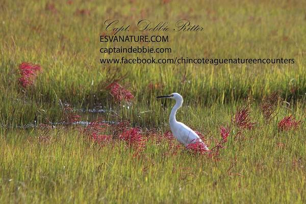 Photograph - Egret In Red 4 by Captain Debbie Ritter