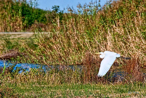 Wall Art - Photograph - Egret In The Marsh by Bill Perry