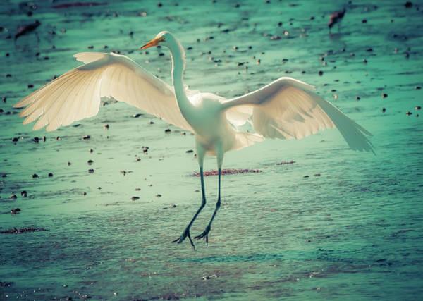 Wildlife Refuge Digital Art - Egret Landing by Melinda Dreyer