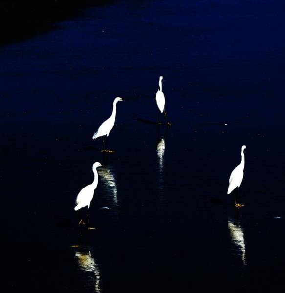 Shore Bird Digital Art - Egret Reflections by David Lane