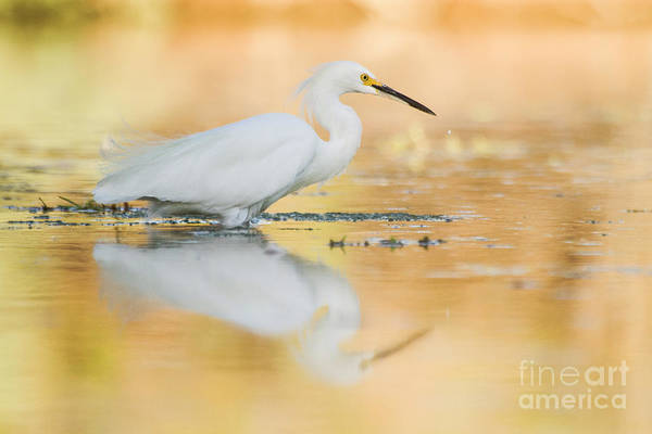 Wall Art - Photograph - Egret When The Sun Is Setting  by Ruth Jolly