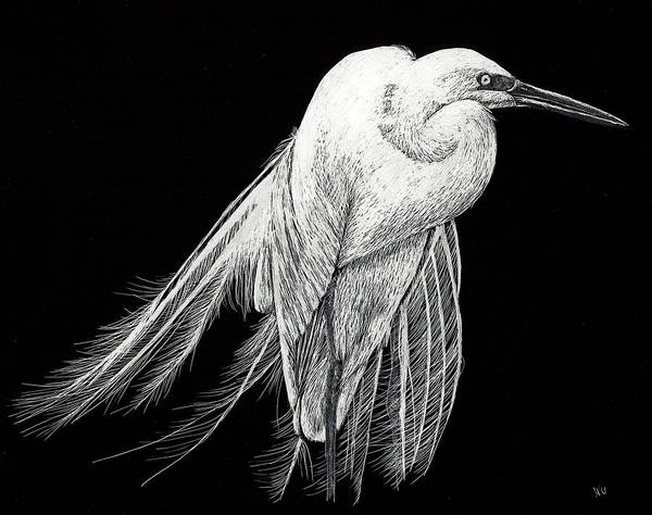 Drawing - Egret by William Underwood