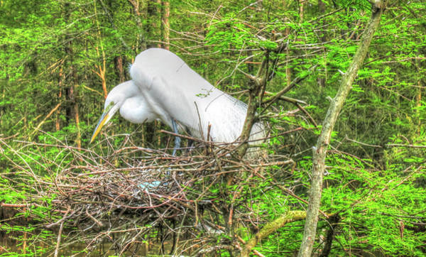 Photograph - Egrets And Eggs by Ree Reid