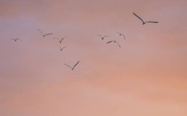 Photograph - Egrets At Sunrise 7058-021318-1cr by Tam Ryan