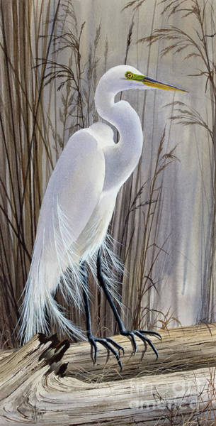 Wall Art - Painting - Egrets Beauty by James Williamson