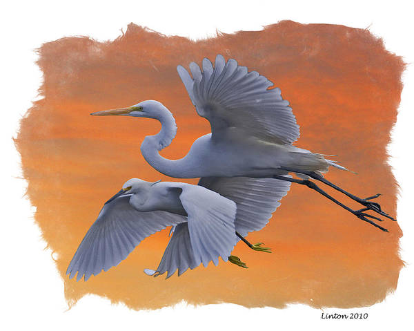 Digital Art - Egrets Great And Snowy by Larry Linton