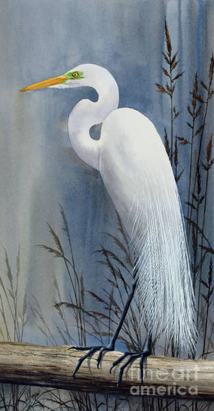 Wall Art - Painting - Egrets Wonder by James Williamson