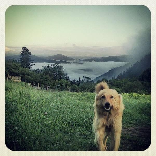 Portrait Photograph - Egunon Chuvak! #dog #animal #pet by Rafa Rivas