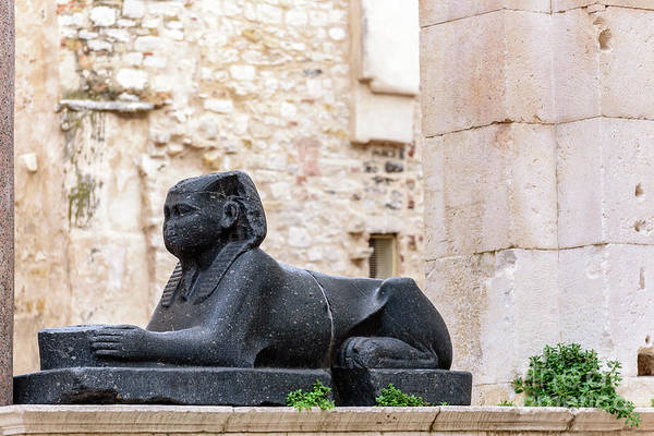 Photograph - Egyptian Sphinx In Diocletian's Palace, Split, Croatia  by Global Light Photography - Nicole Leffer