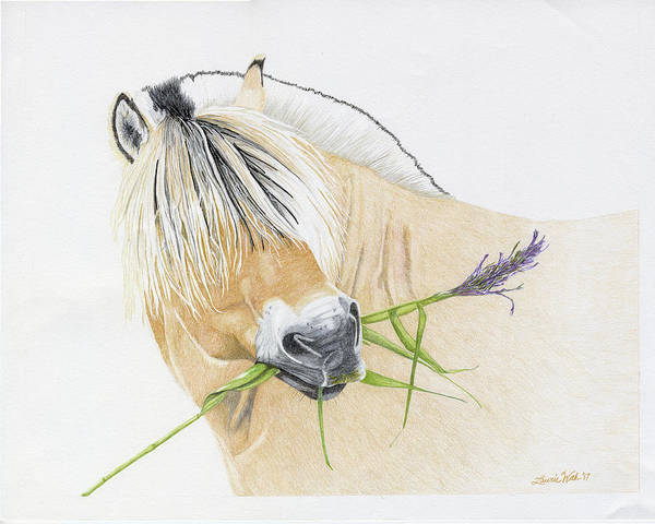 Fjord Drawing - Eik Thun, Norwegian Fjord Stallion by Laurie With