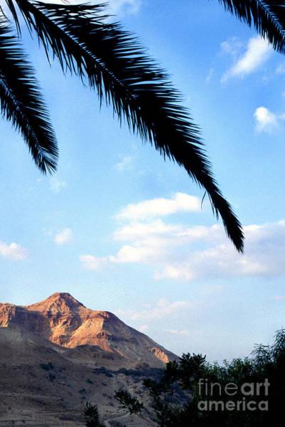 Photograph - Ein Gedi Oasis In The Judean Desert by Thomas R Fletcher
