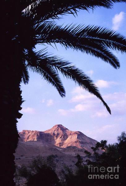 Photograph - Ein Gedi Oasis by Thomas R Fletcher