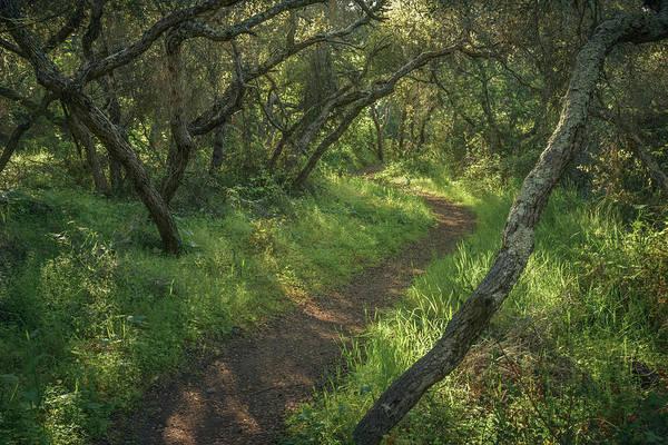 Photograph - El Camino Verde by Alexander Kunz