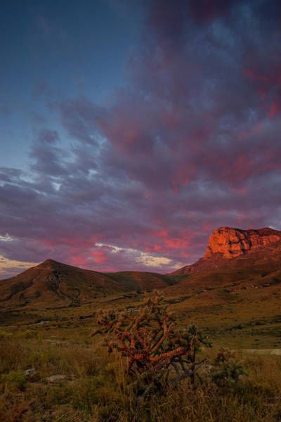 Wall Art - Photograph - El Cap El Cactus by Aaron Bedell