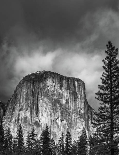 Wall Art - Photograph - El Cap With Pine by Joseph Smith