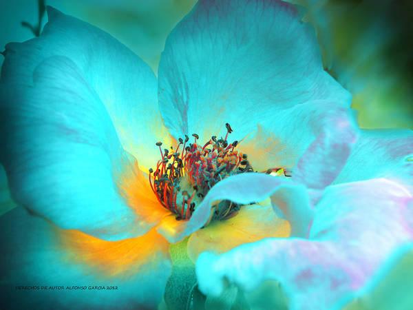 Photograph - El Color De La Vida by Alfonso Garcia