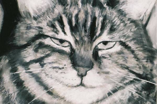 Fat Cat Painting - El Gato by Billie Colson