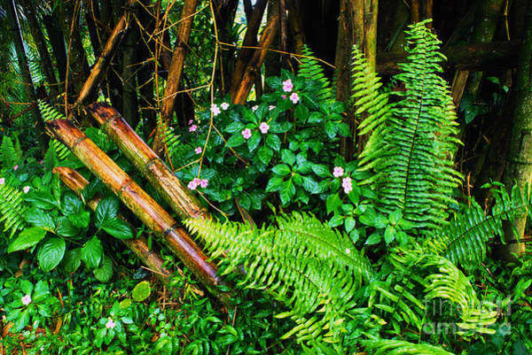 Photograph - El Yunque National Forest Ferns Impatiens Bamboo by Thomas R Fletcher