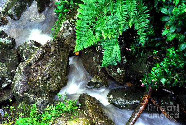 Photograph - El Yunque Rainforest Water by Thomas R Fletcher
