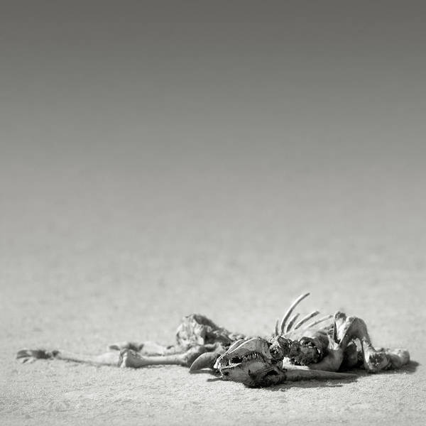 Bone Photograph - Eland Skeleton In Desert by Johan Swanepoel