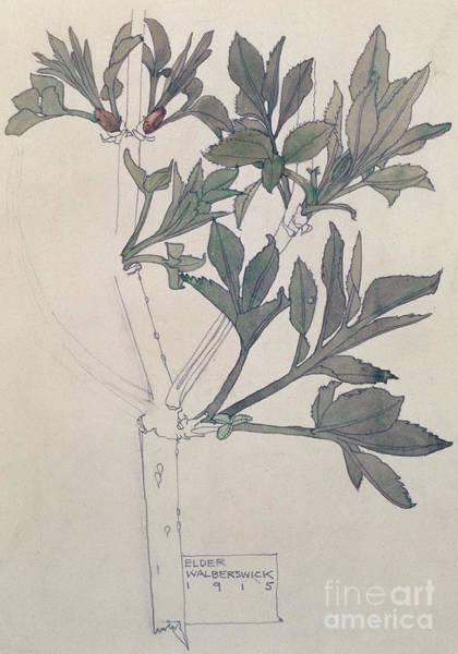 Wall Art - Painting - Elder, Walberswick, 1915  by Charles Rennie Mackintosh
