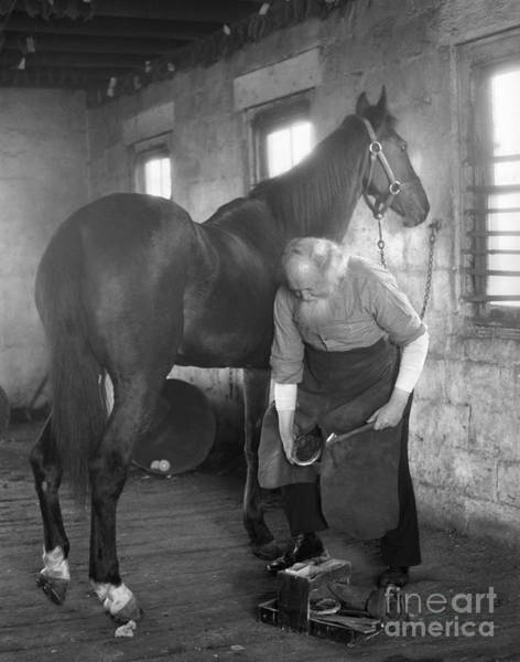 Farrier Photograph - Elderly Blacksmith Shoeing Horse by H. Armstrong Roberts/ClassicStock