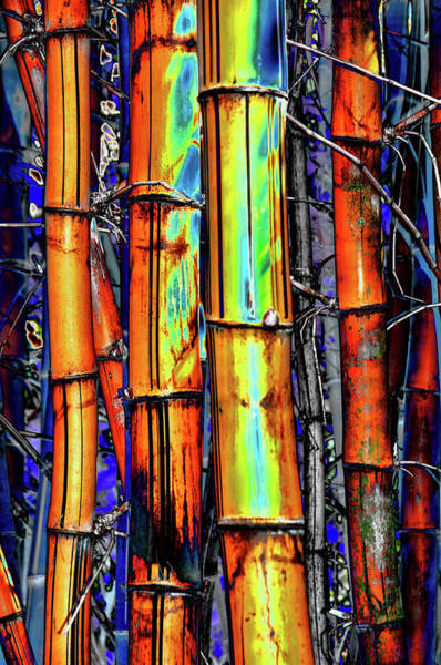 Photograph - Electric Bamboo 3 by Michael Raiman