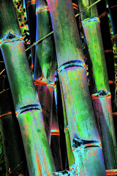 Photograph - Electric Bamboo 4 by Michael Raiman
