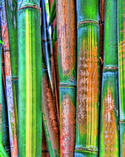 Photograph - Electric Bamboo 7 by Michael Raiman
