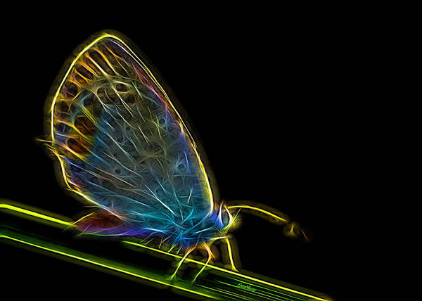 Photograph - Electric Butterfly by Ericamaxine Price