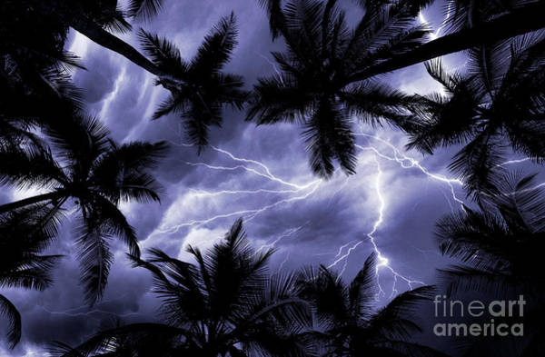 Wall Art - Photograph - Electric Palms by Jon Neidert