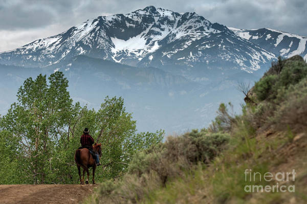 Electric Peak Wall Art - Photograph - Electric Peak Cowboy by Wildlife Fine Art
