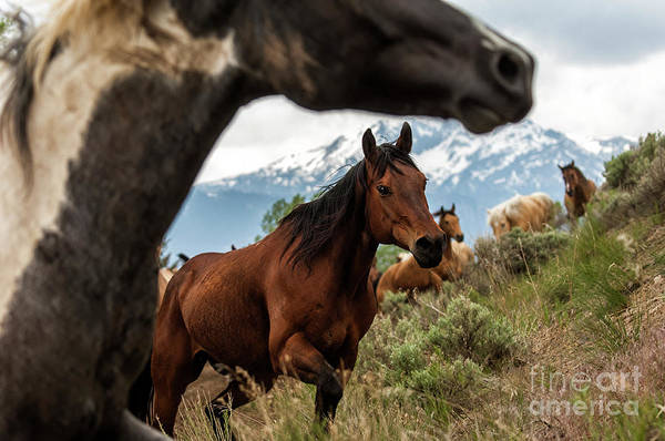 Electric Peak Wall Art - Photograph - Electric Peak Horses by Wildlife Fine Art
