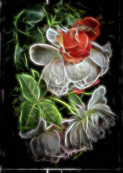 Photograph - Electric Rose by Thom Zehrfeld