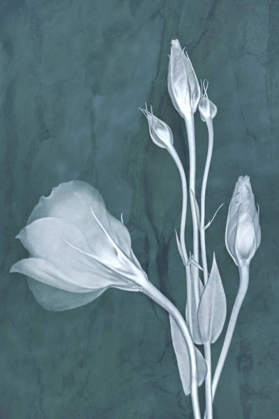 Photograph - Elegance In Teal by Leda Robertson
