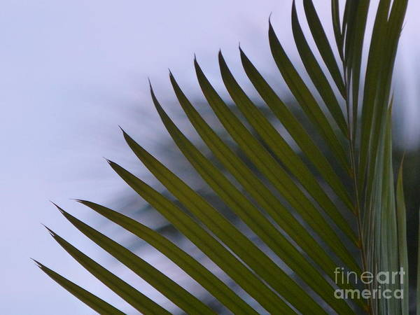Photograph - Elegance Of A Palm by Rosanne Licciardi