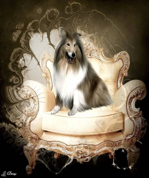 Coolie Photograph - Elegant Collie by G Berry