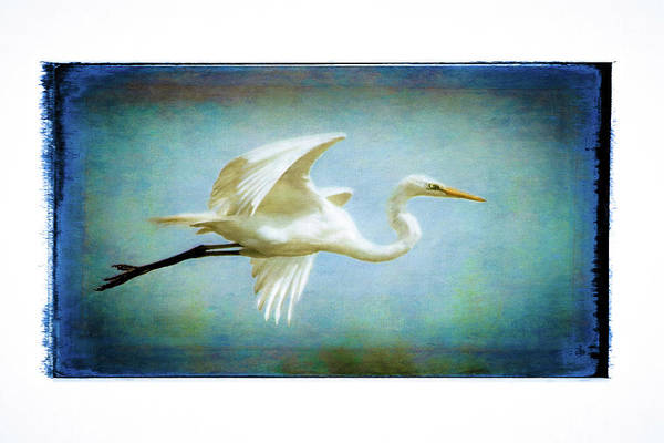Digital Art - Elegant Egret by Carol Fox Henrichs
