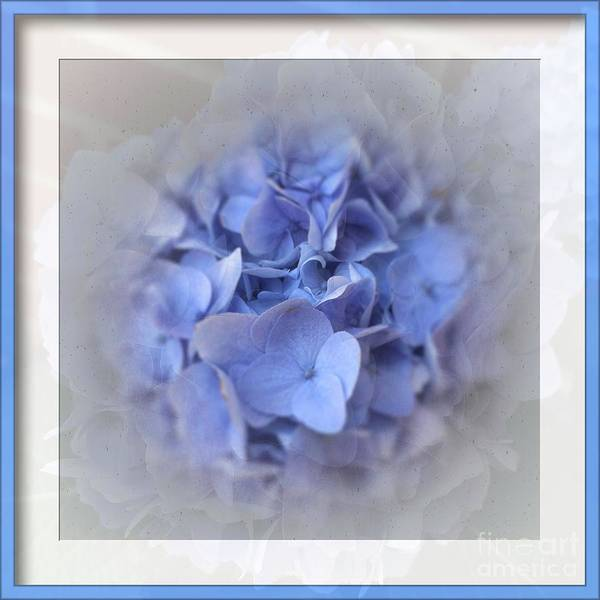 Print On Demand Wall Art - Photograph - Elegant  Hydrangea by Luther Fine Art