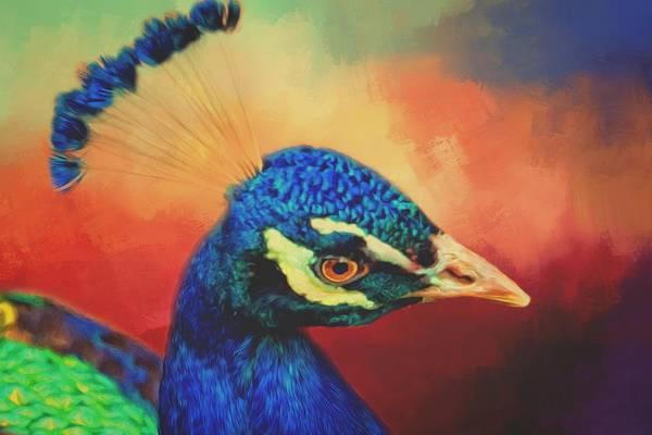 Photograph - Elegant Peacock Portrait by Alice Gipson