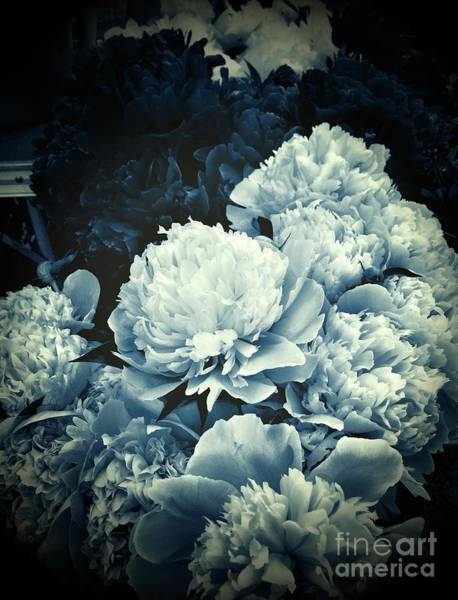 Photograph - Elegant Peonies by S Forte Designs