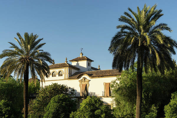 Photograph - Elegant Spanish Mansion Framed By Palm Trees by Georgia Mizuleva