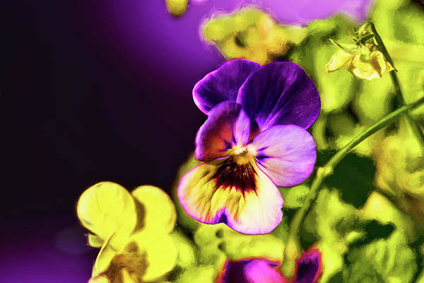 Photograph - Elegant Viola by Kay Brewer