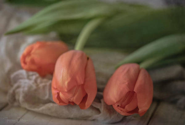 Photograph - Elegantly Orange by Teresa Wilson