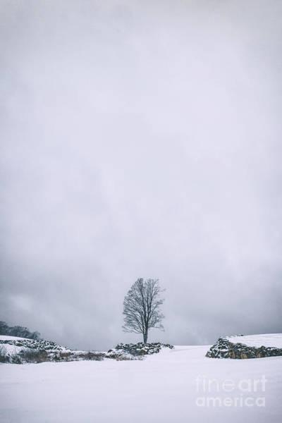 Lone Tree Wall Art - Photograph - Elements Of Silence by Evelina Kremsdorf