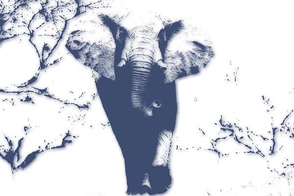 Kruger Photograph - Elephant 3 by Joe Hamilton