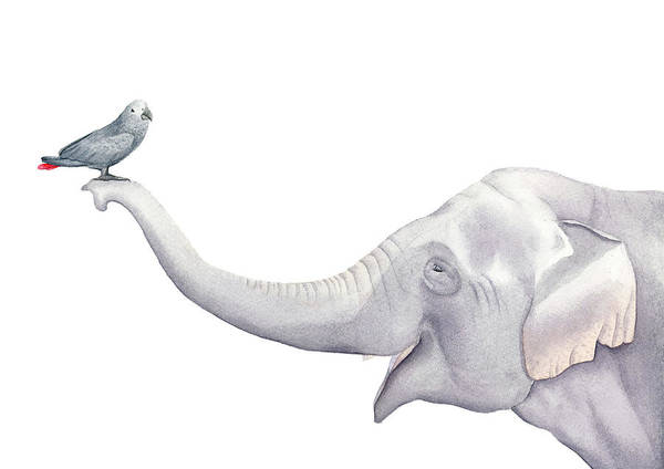 Wall Art - Painting - Elephant And Bird Watercolor by Zapista Zapista
